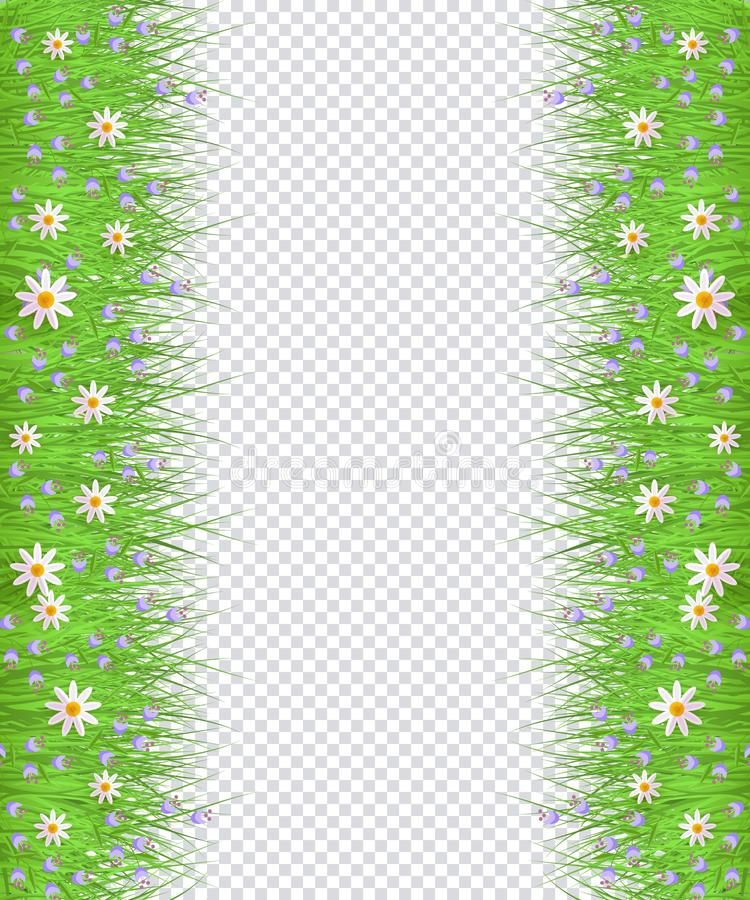Vector groen gras, de grenskader van de madeliefjekamille vector illustratie