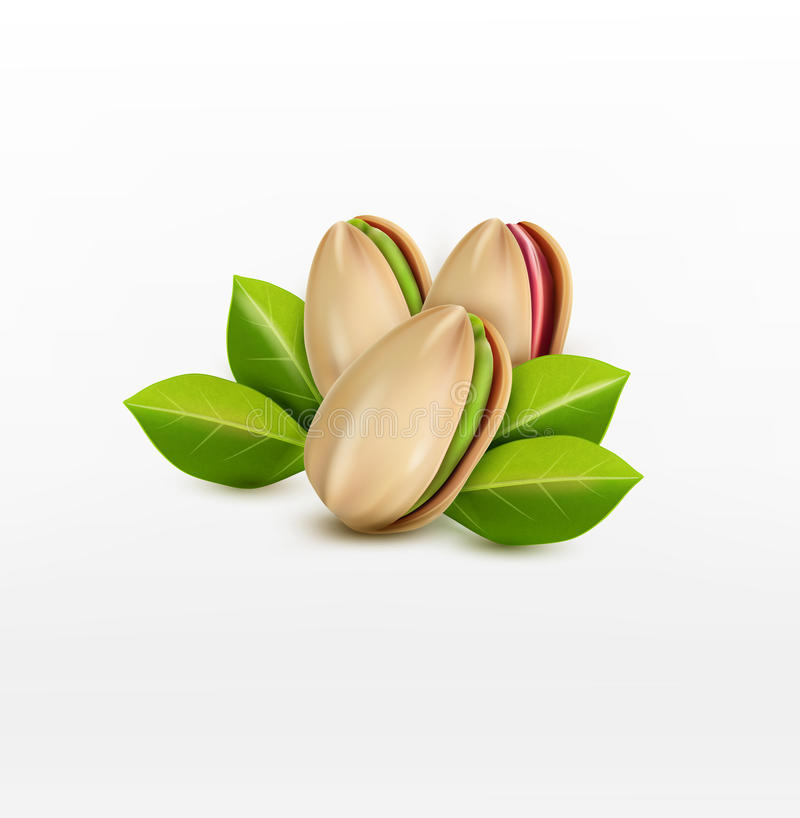 Free Vector Group Of Pistachio Nuts, Isolated On A White Background Royalty Free Stock Photography - 70195927