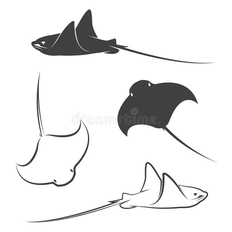 Vector group of stingray. On white background stock illustration