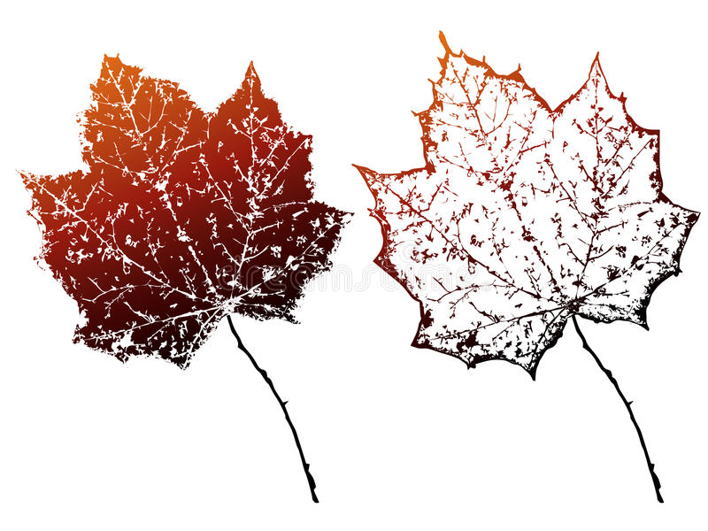 Vector grunge autumn leaves. vector illustration