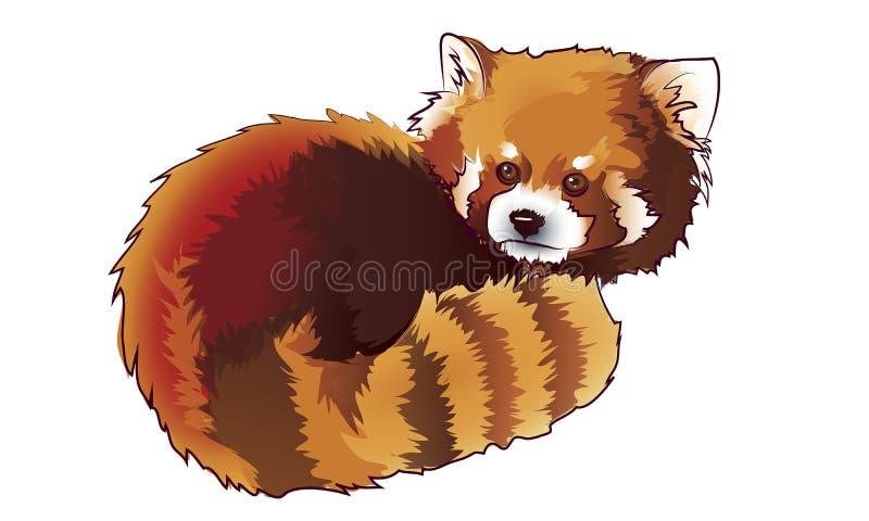 Vector ha illustrato il ritratto del panda minore Red anche chiamato Orso-CA illustrazione di stock