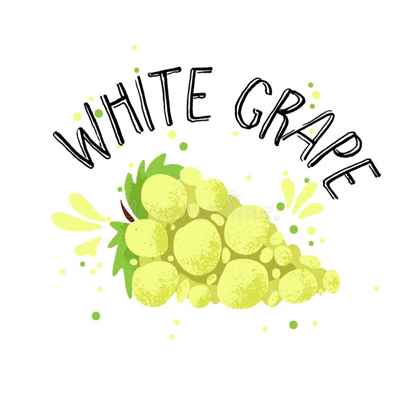 Vector hand draw white grape illustration. Yellow grapes with juice splash isolated on white background. Textured grape. With splashes, juice tropical fruit vector illustration