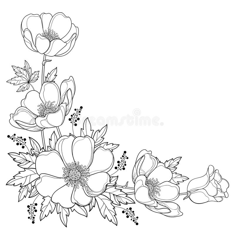 Vector hand drawing corner bouquet with outline Anemone flower or Windflower, bud and leaf in black isolated on white background. royalty free illustration