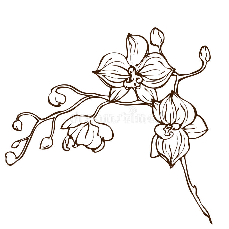 Free Vector Hand Drawing Orchid Flower Royalty Free Stock Photos - 50925288