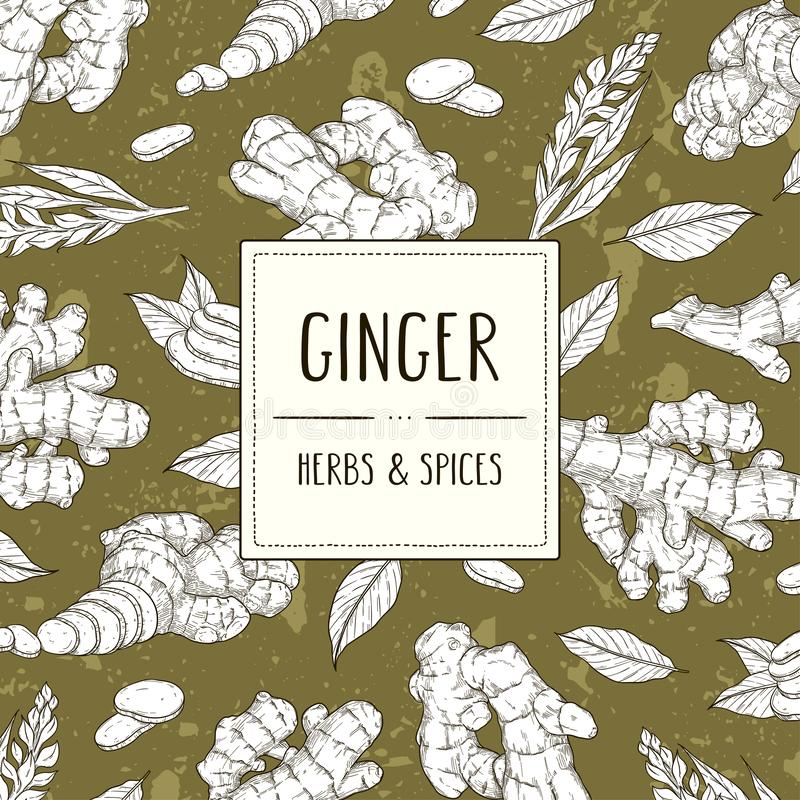 Vector hand drawn banner with ginger root stock illustration