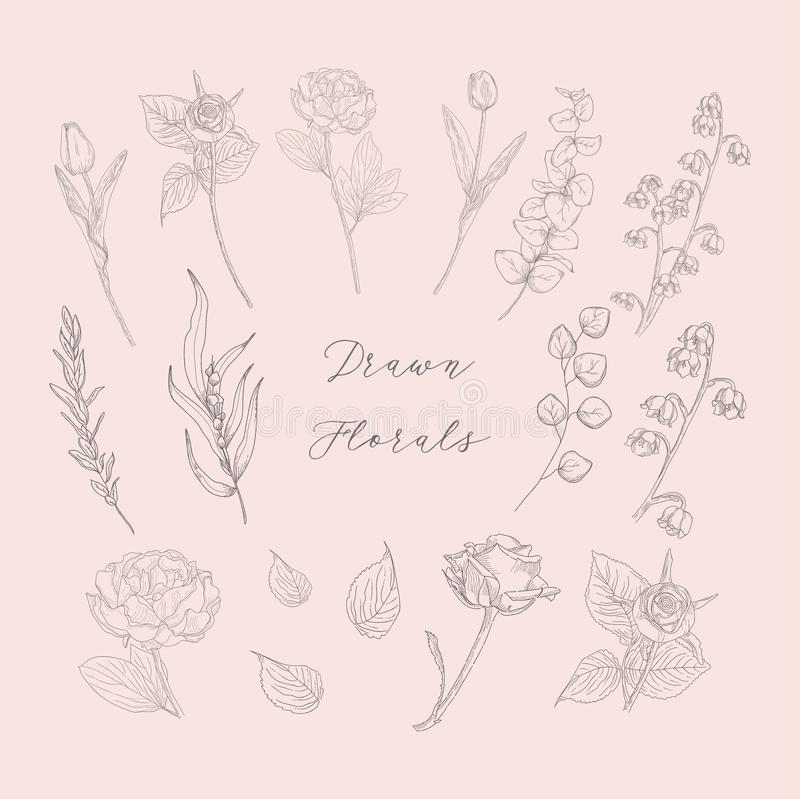 Vector Hand Drawn Florals, Flowers, Plants, Herbs. royalty free illustration