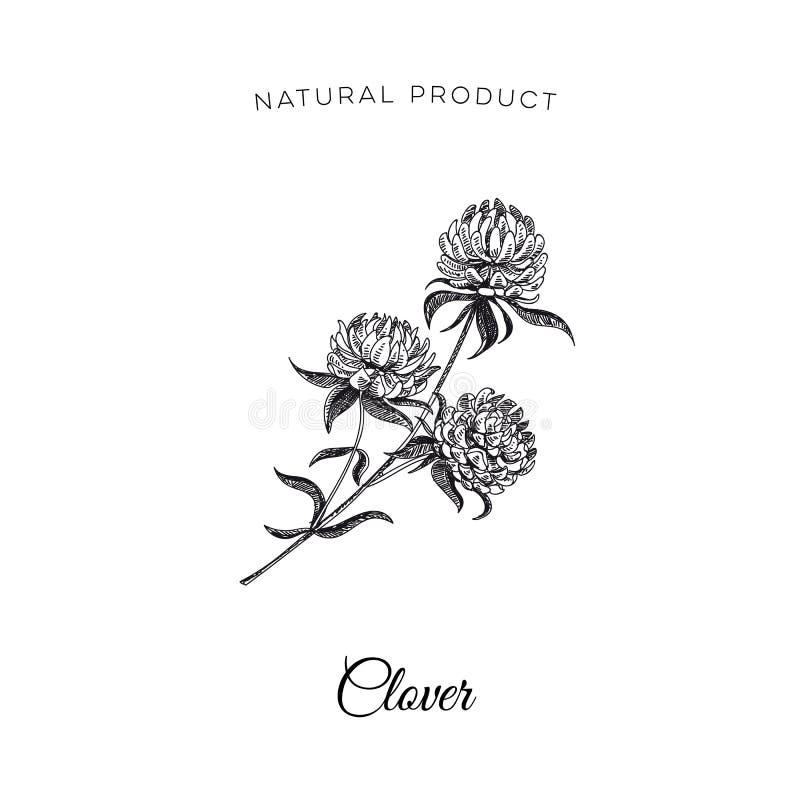 Vector Hand Drawn Honey Illustration. Stock Vector - Illustration of ...