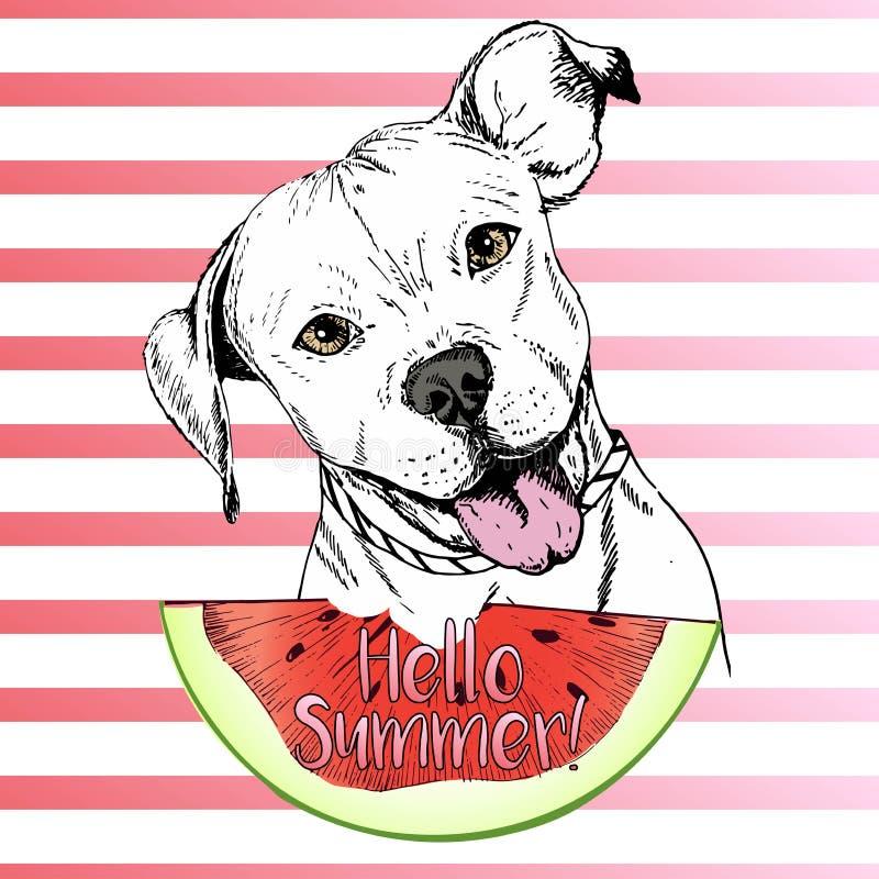 Vector hand drawn illustration of english pitbull dog eating the watermelon slice. Hello summer. On pink strips. fresh fashion vibrant summer poster royalty free illustration