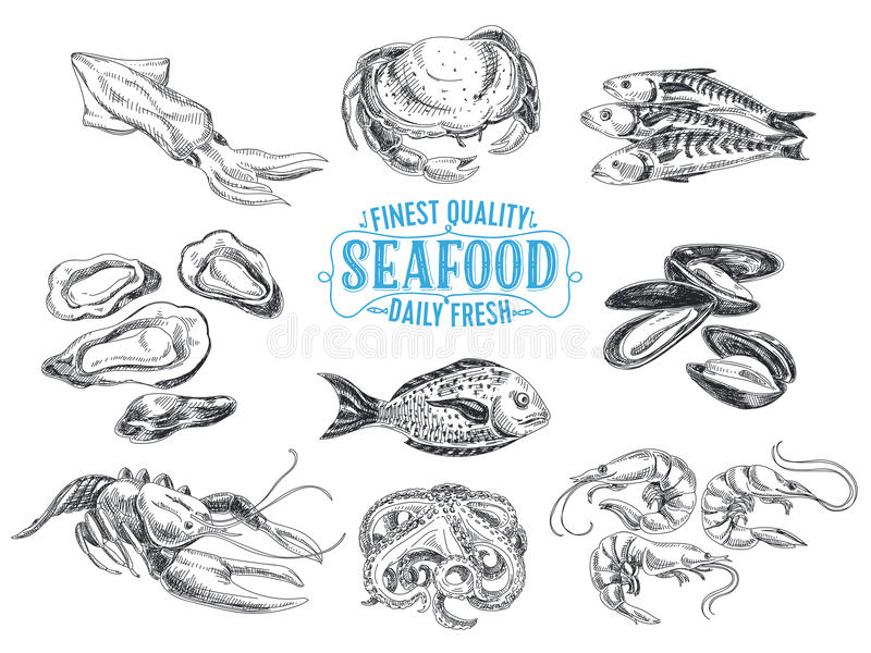 Vector hand drawn illustration with seafood vector illustration