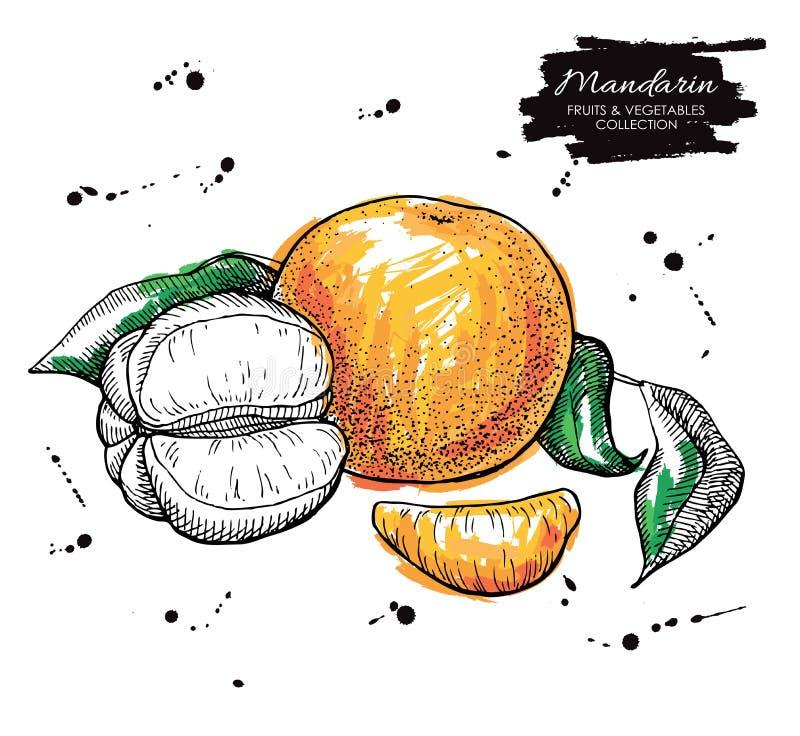 Vector hand drawn mandarin illustration. Artistic collection vector illustration