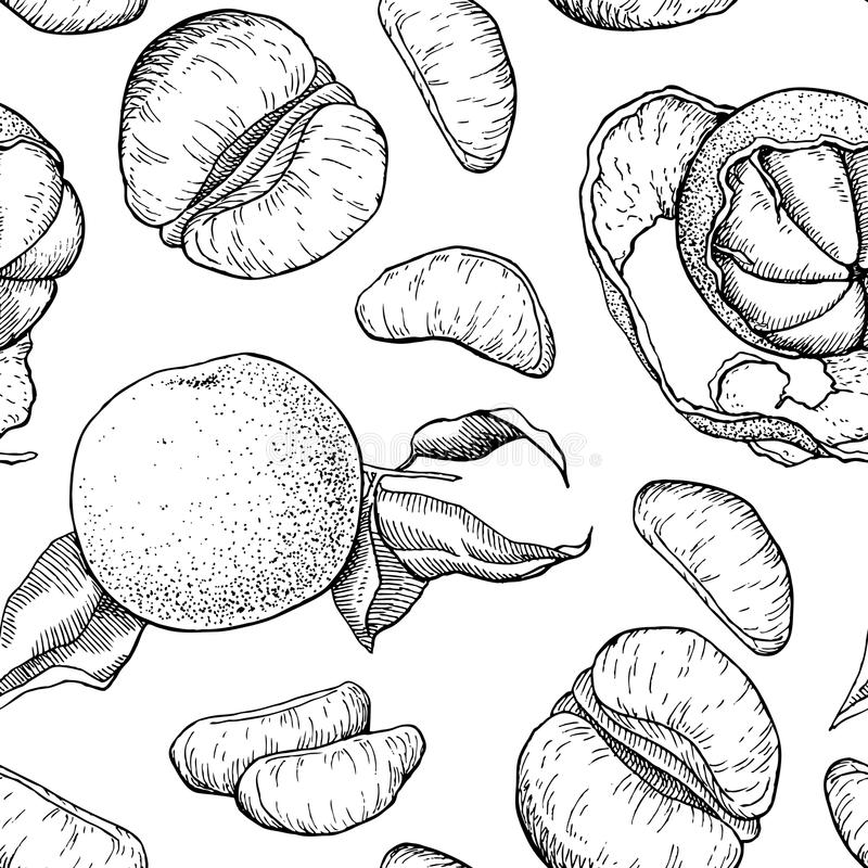 Vector hand drawn mandarin seamless pattern. Engraved collection royalty free illustration