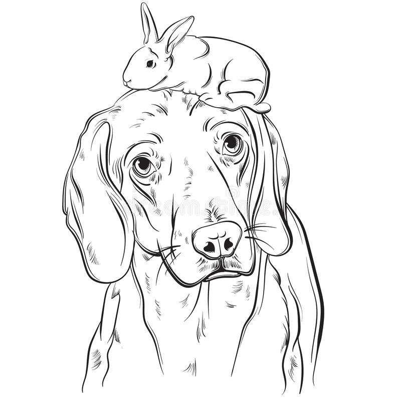 Vector hand drawn realistic illustration of beagle with rabbit. Portrait of sad dog with sorry eyes. Template for card poster banner and print for t-shirt royalty free illustration
