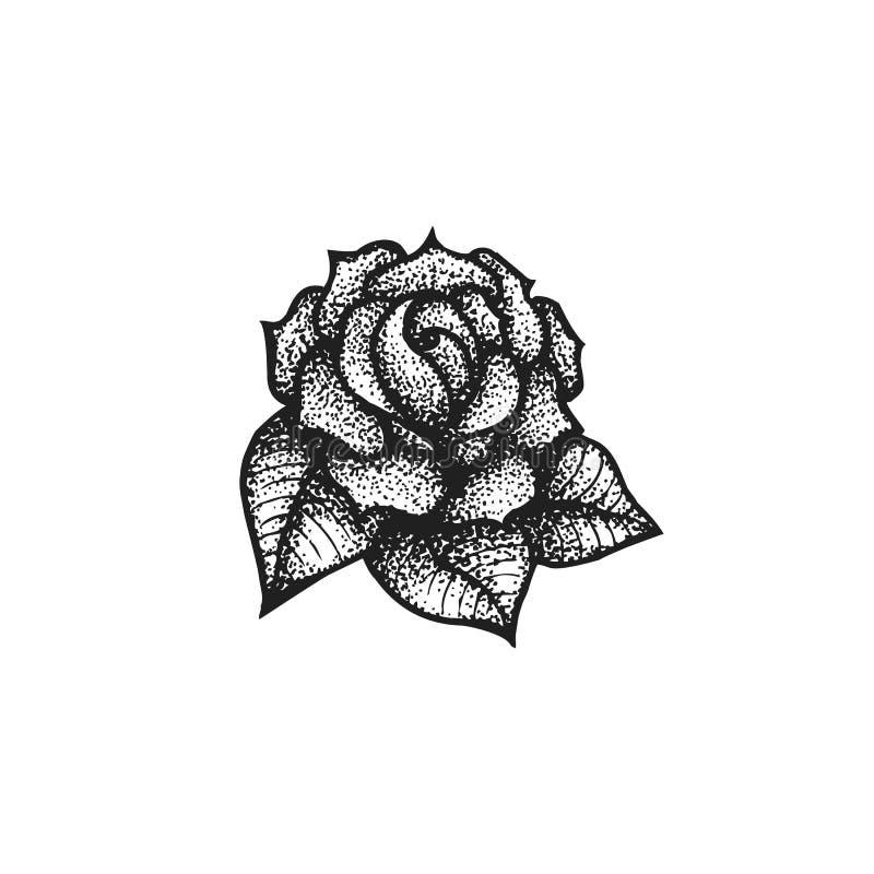 Vector Hand Drawn Rose Illustration Stock Vector Illustration of