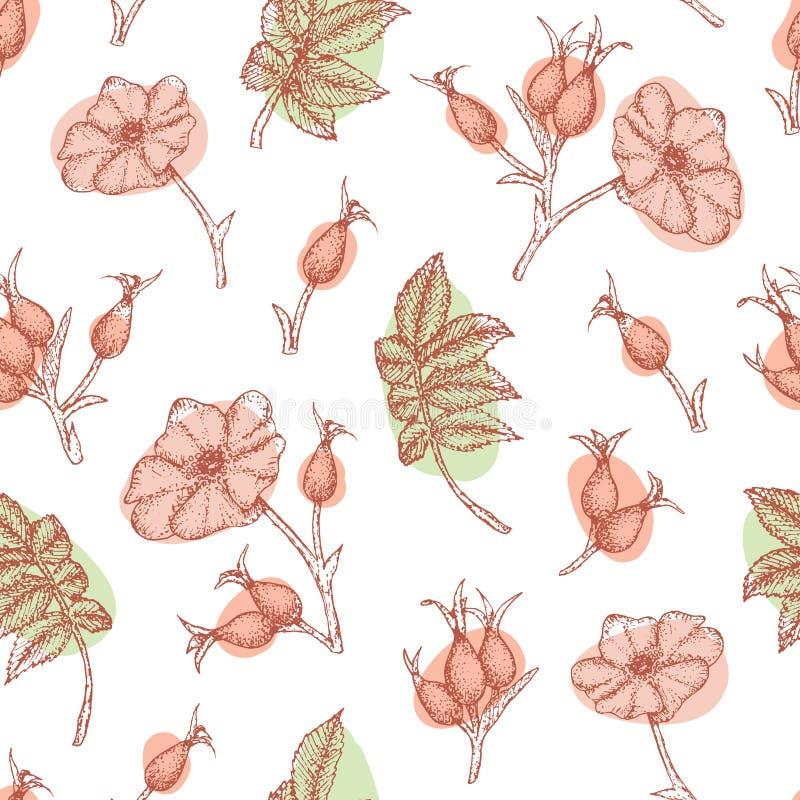 Rosehip pattern. royalty free illustration