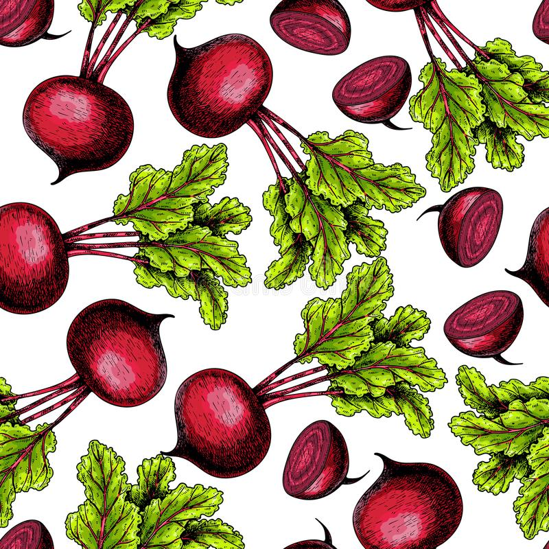 Vector hand drawn seamless pattern of beetroot whole and sliced with haulm. Colored illustration. Farm vegetables. Engraved art. Organic sketched objects vector illustration