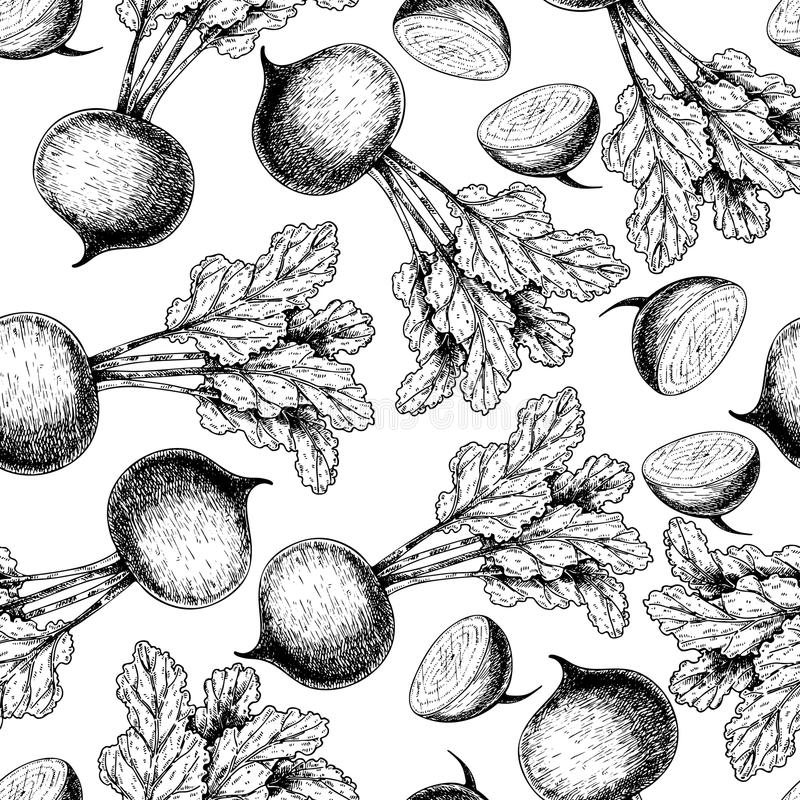 Vector hand drawn seamless pattern of beetroots with haulm. Farm vegetables. Engraved art. Organic sketched objects. Restaurant, menu, grocery, market store stock illustration
