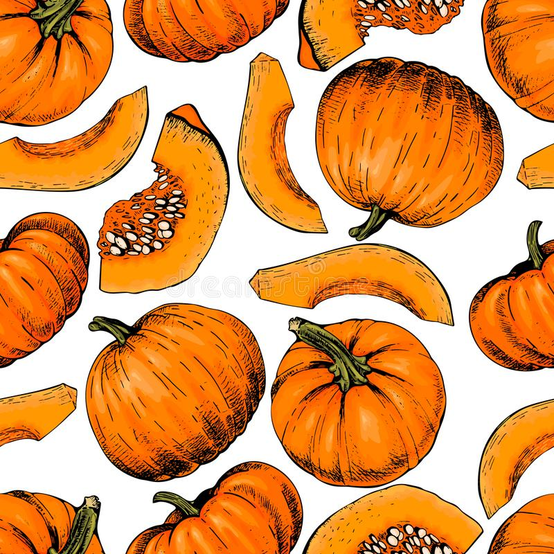 Vector hand drawn seamless pattern of pumpkins. Farm vegetables. Engraved colored art. Organic sketched object royalty free illustration