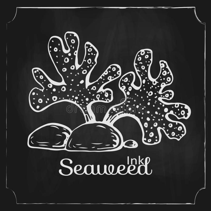 Vector hand drawn seaweed on black chalkboard. Vintage engraved marine plant drawn on blackboard. underwater sea algae with stones. Element of sea, ocean stock illustration