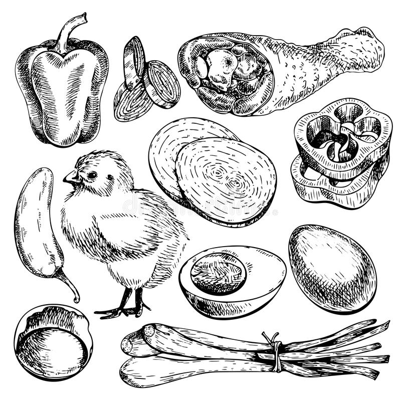 Vector hand drawn set of farm vegetables. Isolated bell pepper, chicken, leg, eggs, onion. Engraved art. Organic sketched objects. Use for restaurant, menu royalty free illustration