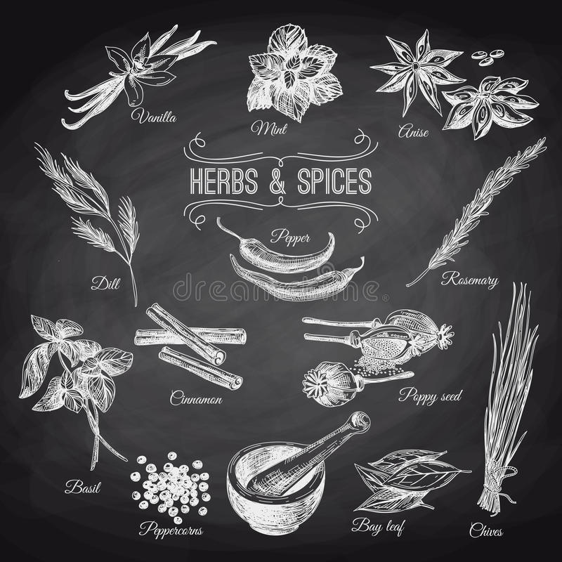 Vector hand drawn set with Herbs Spices. Vintage royalty free illustration