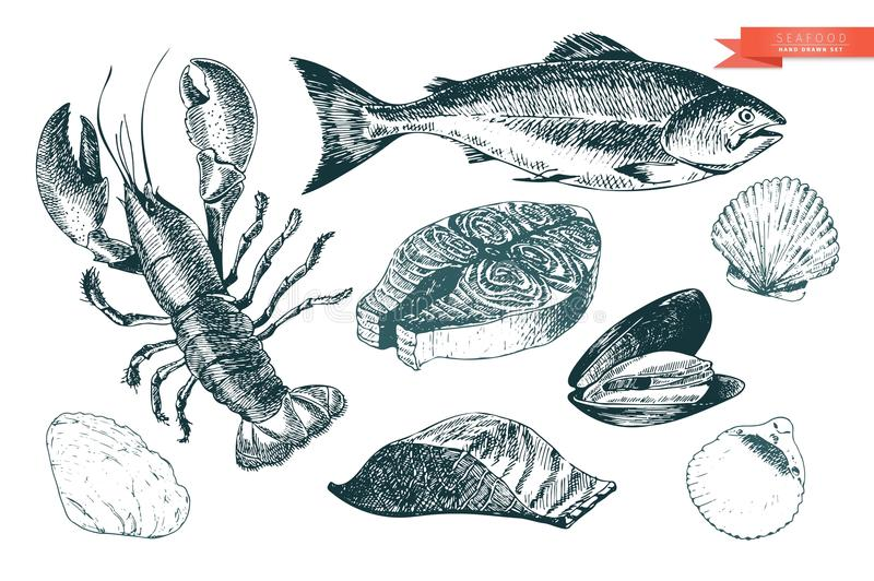 Vector hand drawn set of seafood icons. Lobster, salmon, fillet and clams. Engraved art. Delicious food menu objects. vector illustration