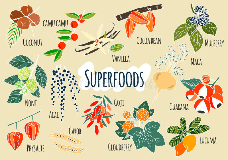 Vector hand drawn superfoods vector illustration