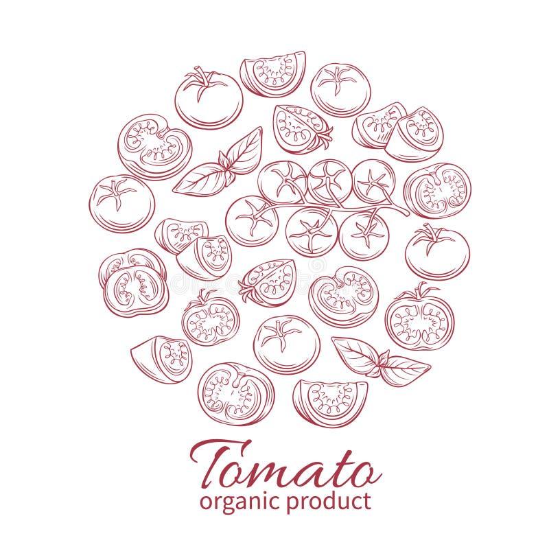 Vector hand drawn tomato icons set. royalty free illustration
