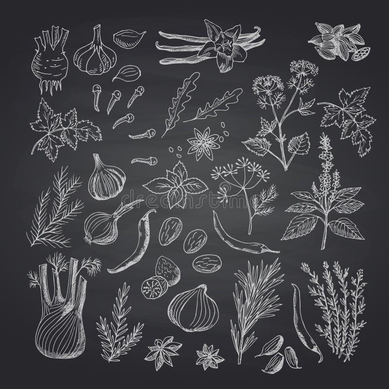 Vector Hand gezeichnete Kräuter und Gewürze auf schwarzer Tafelillustration vektor abbildung