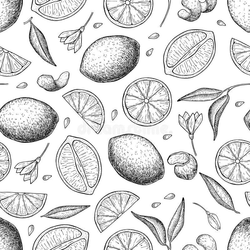 Vector Hand gezeichnetes nahtloses Muster des Kalkes und der Zitrone lizenzfreie abbildung