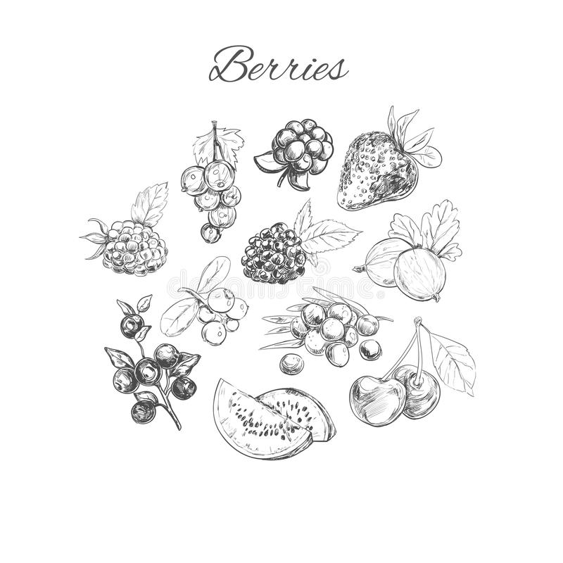 Vector hand sketched set of berries royalty free illustration