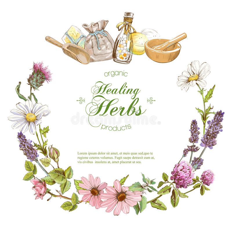 Vector herbal banner vector illustration