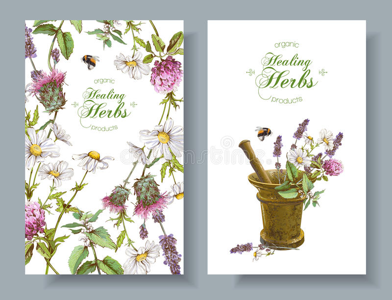 Vector herbal banners vector illustration