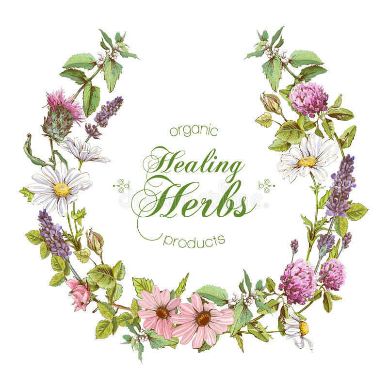 Vector herbal wreath vector illustration