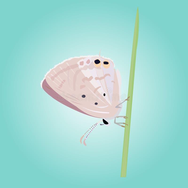 Download Vector Hermoso De La Mariposa Ilustración del Vector - Ilustración de decorativo, vendimia: 41920170