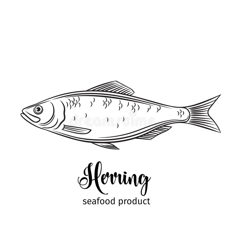 Vector herring. Hand drawn icon badge fish for design seafood packaging and market royalty free illustration