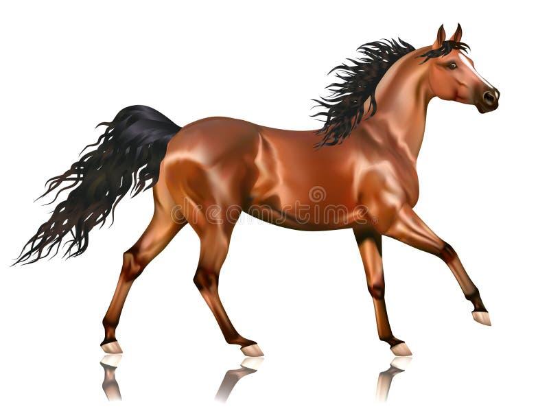 Vector het lopen baai Arabisch paard royalty-vrije illustratie