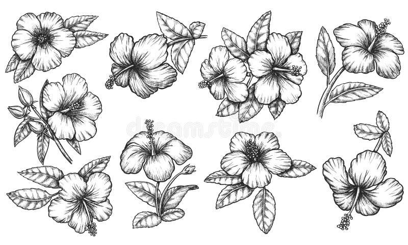 Vector Hawaiian Hibiscus Flourish Ink Outline Sketch Stock Vector Illustration Of Monochrome Drawn 198111346