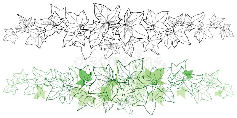 Vector horizontal border of outline bunch Ivy or Hedera vine. Ornate leaf of Ivy in black and pastel green isolated on white. Vector horizontal border of vector illustration