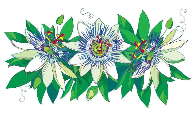 Vector horizontal garland with outline tropical blue Passiflora or Passion flowers, bud, leaves and tendril isolated on whiteÑŽ stock illustration