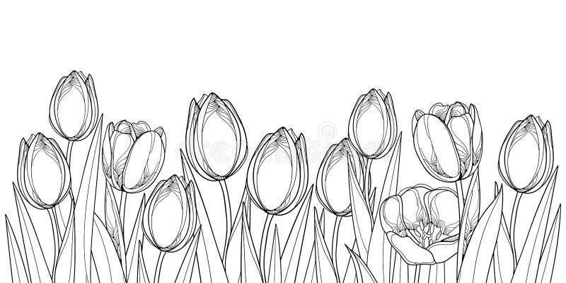 Vector horizontale Grenze mit den Entwurfstulpenblumen, Knospe und aufwändigen Blättern im Schwarzen lokalisiert auf weißem Hinte lizenzfreie abbildung
