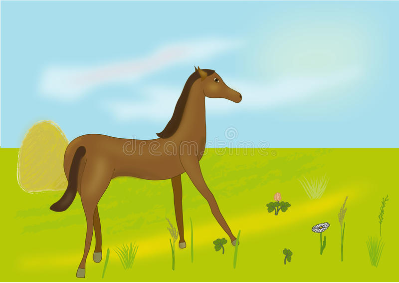 Vector a horse on a meadow stock images