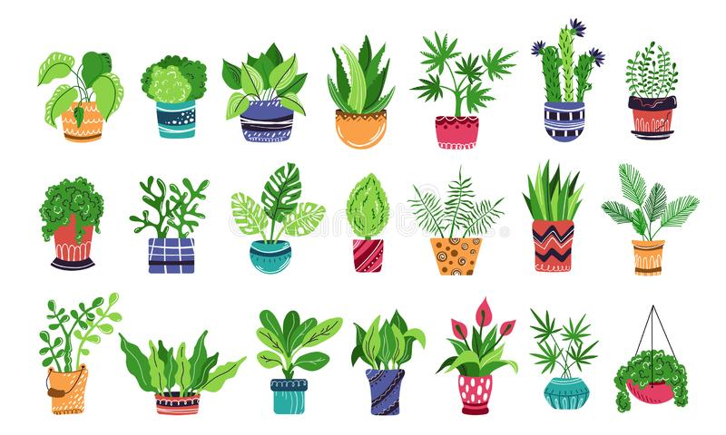 Vector HousePlants Set. Large set of home plants or flowers in pots, home garden or greenhouse, collection of isolated elements on white. Flat style stock illustration