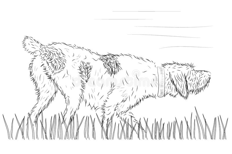 Vector hunting dog on the grass vector illustration