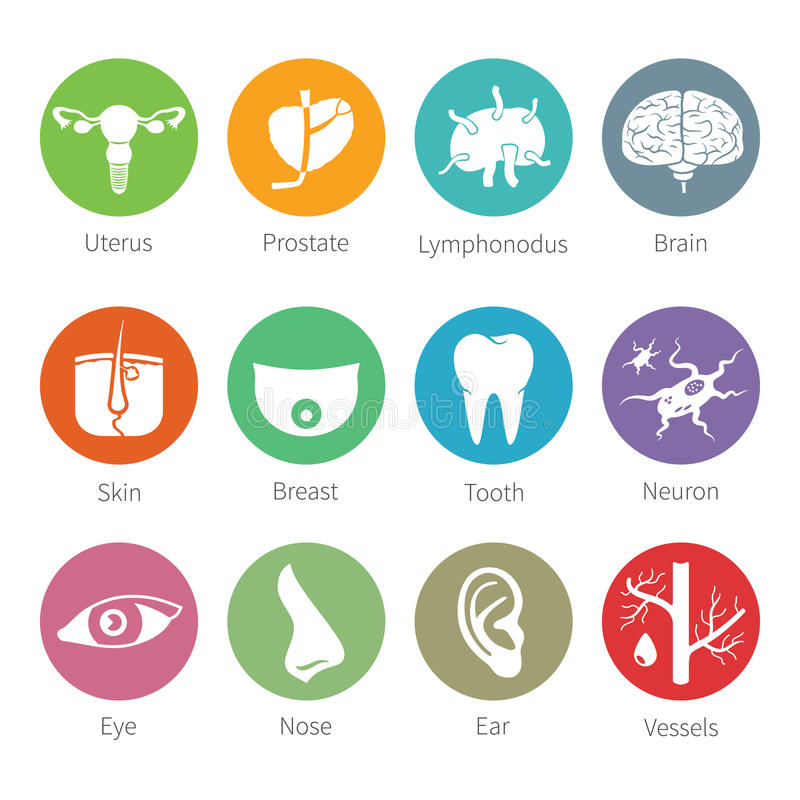Vector icon set of human internal and external organs in flat style royalty free illustration