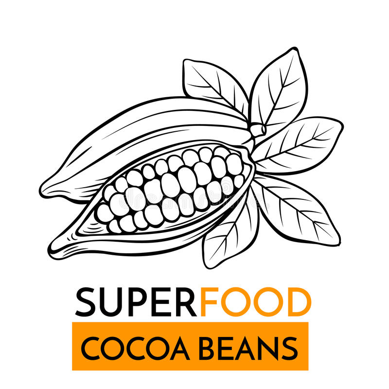 Vector icon superfood cocoa beans vector illustration