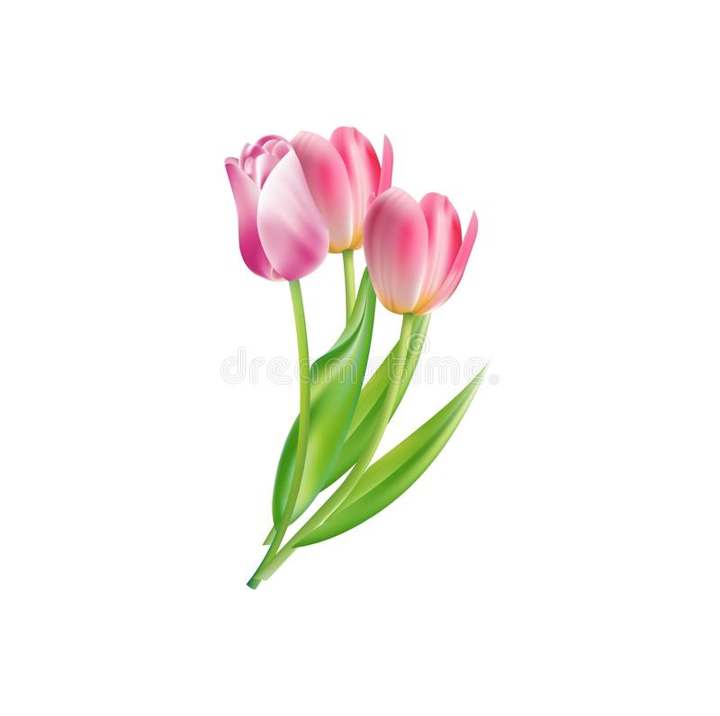 Vector Rose Flowers Icon For Springtime Season Stock