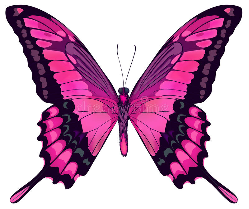 Beautiful pink butterfly royalty free illustration
