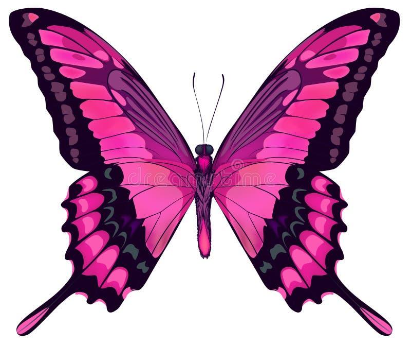 Schöner rosa Schmetterling lizenzfreie abbildung
