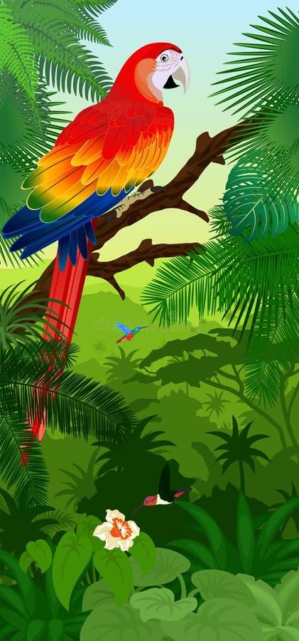 Vector il baner verticale della foresta pluviale della giungla con l'ara ed i colibrì rossi dell'ara macao del pappagallo illustrazione di stock