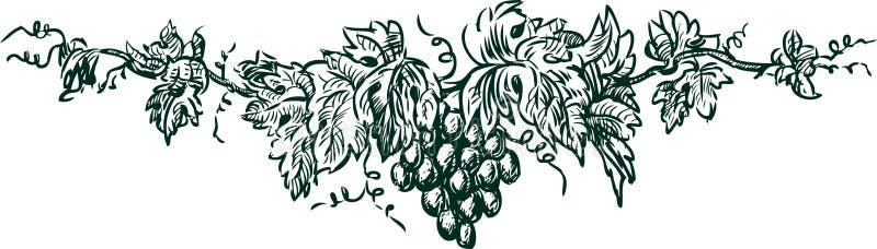 Ramifichi con l'uva illustrazione vettoriale